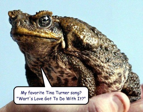 What's a Toad's Favorite Tina Turner Song?