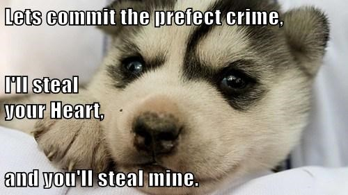 Lets commit the prefect crime, I'll steal                                                      your Heart, and you'll steal mine.