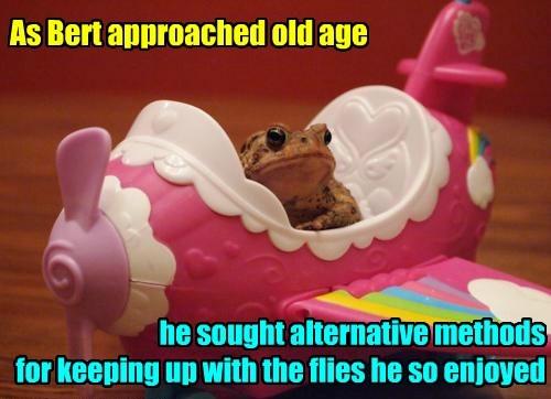 old,plane,funny,frog,flies