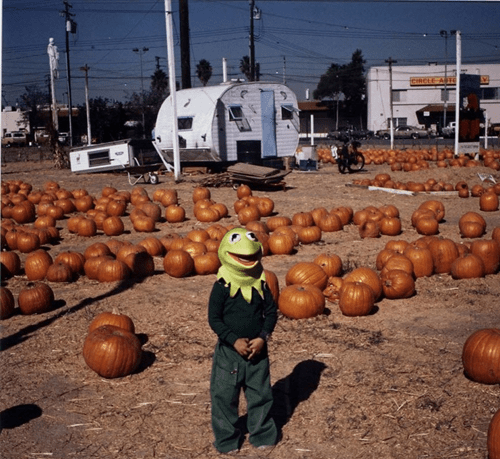 What a Strange Pumpkin Stand