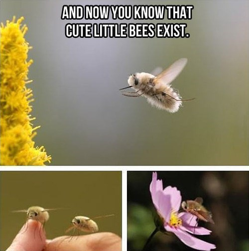 wtf,cute,bees,animals