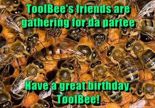 ToolBee's friends are gathering for da partee  Have a great birthday, ToolBee!