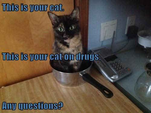 This is your cat. This is your cat on drugs. Any questions?