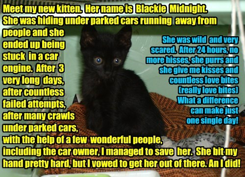 Meet my new kitten.  Her name is  Blackie  Midnight.  She was hiding under parked cars running  away from  people and she  ended up being  stuck  in a car engine.  After  3  very long  days,  after countless  failed attempts,   after many crawls   under p