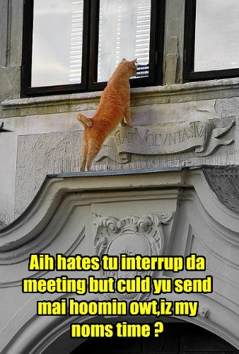 Aih hates tu interrup da meeting but culd yu send mai hoomin owt,iz my noms time ?