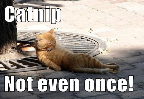 Catnip  Not even once!