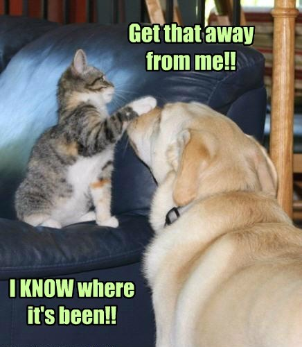 dogs,gross,dog breath,Cats,funny