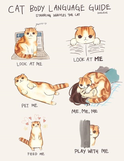 A Handy Guide to Cat Body Language