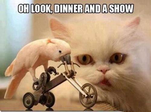 birds,dinner,show,funny