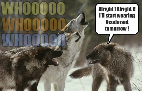 wolves,deodorant,funny,instincts