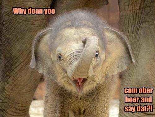 I Dubbul Dingo Daer Yoo!