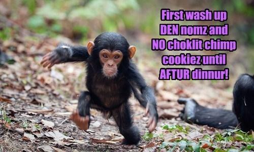 rules,chimp,dinner,funny