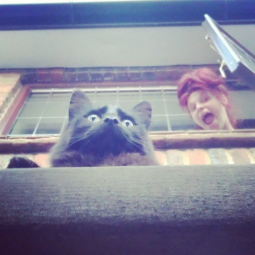 photobomb,Cats,funny
