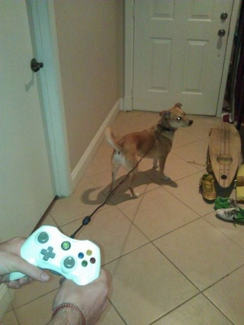 dogs,leashes,controllers,funny