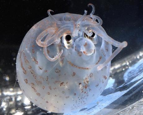 squid,creepicute