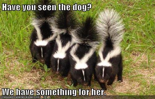 skunk,fragramt,gift,dogs,funny