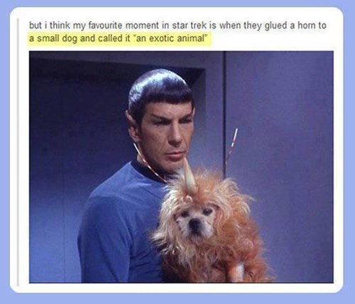 dogs,wtf,Star Trek