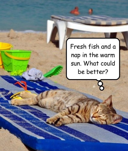 Fresh fish and a nap in the warm sun. What could be better?