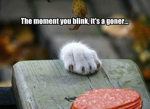 The moment you blink, it's a goner...