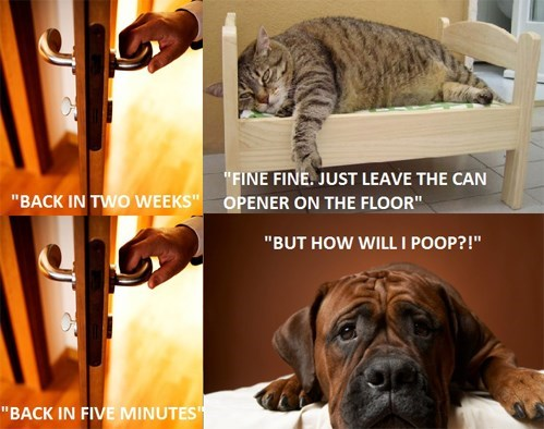 Cat vs. Dogs