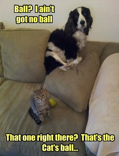 dogs,play,tennis ball,Cats,funny