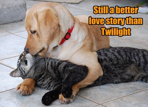 A Tail of Forbidden Love