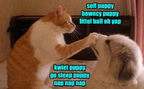 dogs,soft kitty warm kitty,nerves,Cats,funny
