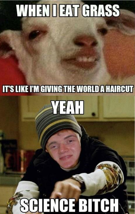 world,haircut,grass,science,drug stuff,School of FAIL