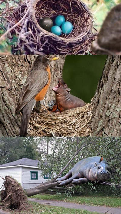 hippos,birds,life hacks,critters,funny