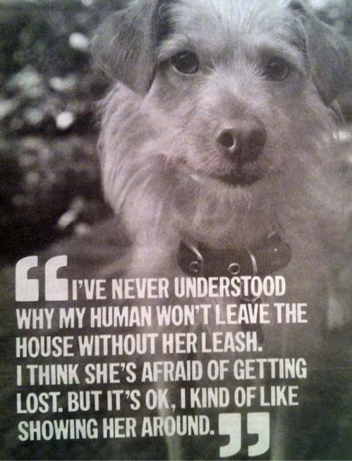 A Dog's Thoughts
