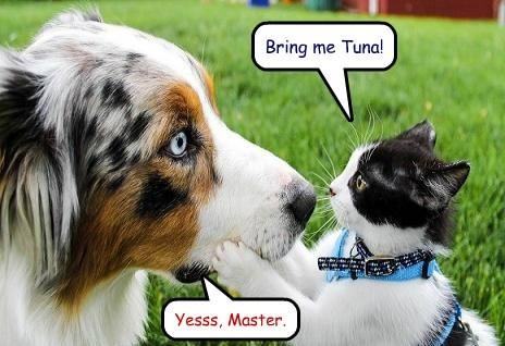 Bring me Tuna!