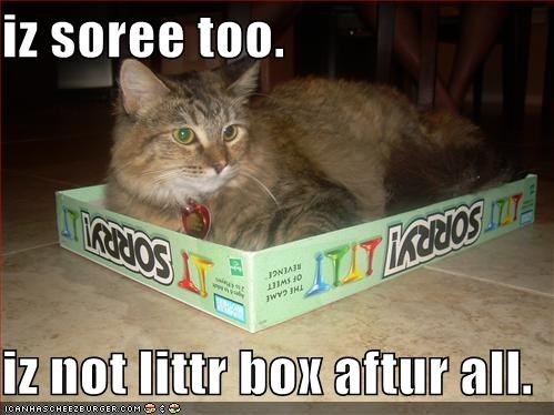 iz soree too.  iz not littr box aftur all.
