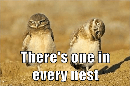 Owl,funny,derp