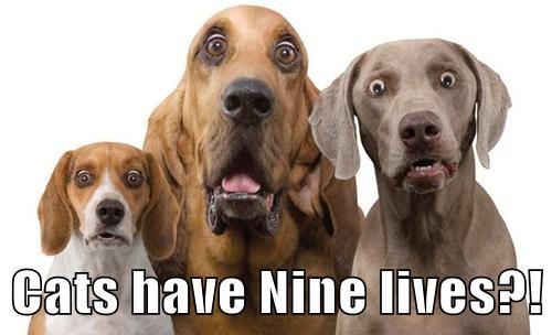 rip off,bug eyed,nine lives,Cats,funny