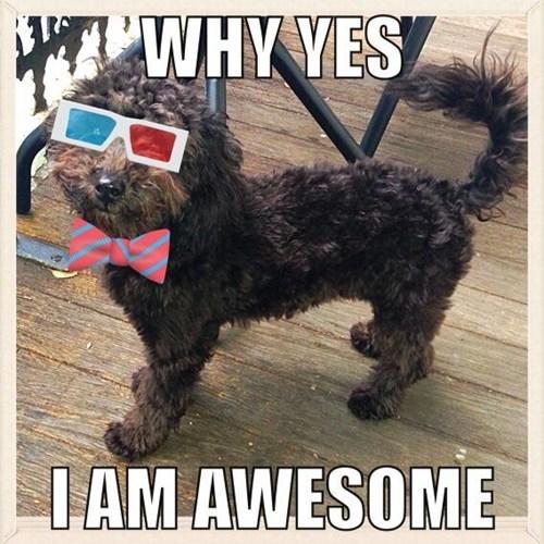 bowtie,3d glasses,dogs