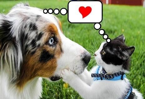 interspecies,cute,love,lubby dubby