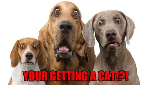 YOUR GETTING A CAT!?!