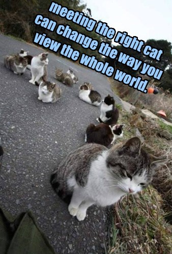 meeting the right cat  can change the way you view the whole world.