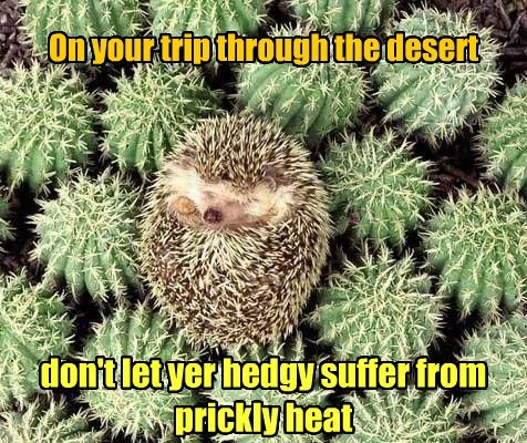 Heat,desert,travel advisory,cactus,hedgehog,funny