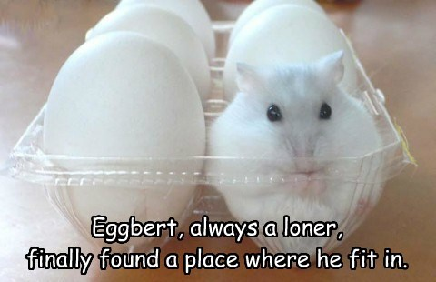 eggs,home sweet home,cute,mouse