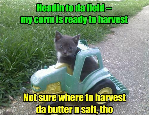 I love corm season!