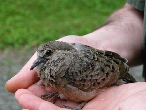 A Bird in the Hand Is Worth a Squee or Two