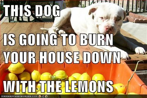 THIS DOG IS GOING TO BURN YOUR HOUSE DOWN WITH THE LEMONS