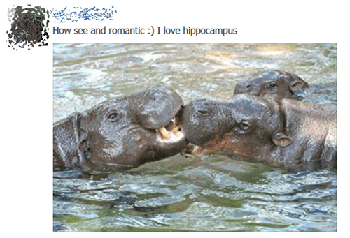 hippos,brains,the brain,hippocampus,hypothalamus,hippopotamus