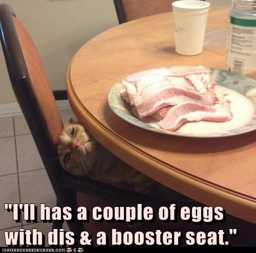 """""""I'll has a couple of eggs with dis & a booster seat."""""""