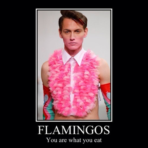 fashion,wtf,feathers,flamingo,funny