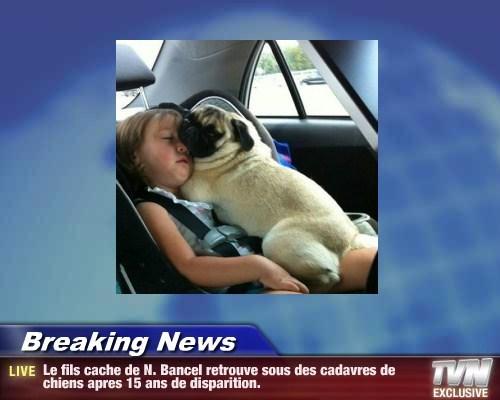 Breaking News - Le fils cache de N. Bancel retrouve sous des cadavres de chiens apres 15 ans de disparition.