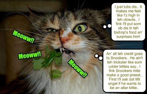 Sister Mary-Catrin is at teh nip agin!! But she was told by Snookers dat it was a helfy an' nutrishus kittie food..