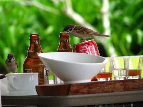 Crunk Critters: All Birds Prefer Beer Over Soda