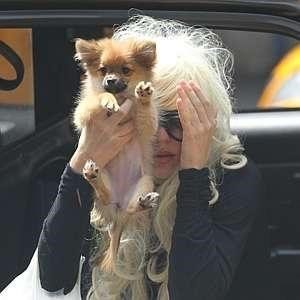 Amanda Bynes Accidentally Soaks Dog in Gasoline
